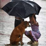take care of your pets in the rainy season