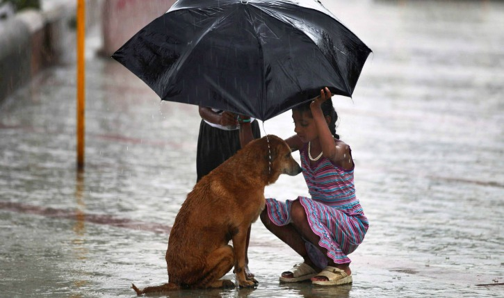 How to take care of your pets in the rainy season