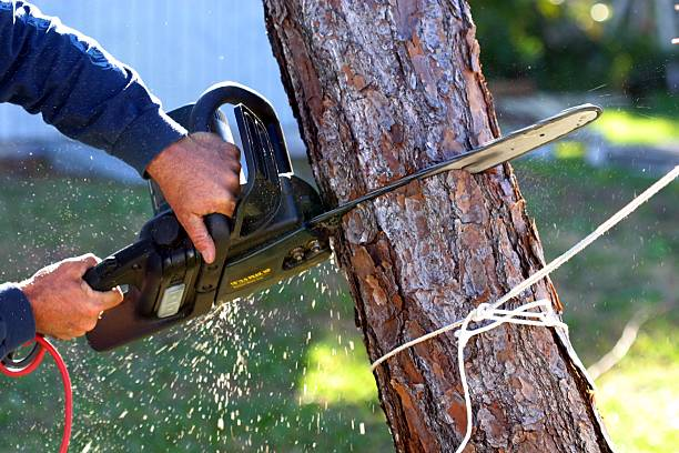 Soil Optimization And Tree Service